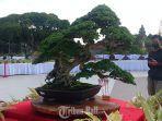 pohon-sancang-pamnas-bonsai-gianyar-2021.jpg
