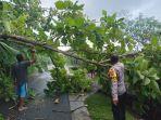 pohon-tumbang-di-banjar-baluk-ii-desa-baluk-kecamatan-negara-rabu-6-oktober-2021.jpg