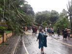 pohon-tumbang-di-ruas-jalan-satria-di-desa-paksebali-kecamatan-dawan-klungkung.jpg