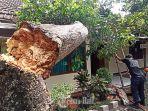 pohon-tumbang-di-sdn-10-sumerta-denpasar.jpg