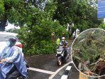 pohon-tumbang-terjadi-di-sejumlah-tempat-di-kabupaten-gianyar-selasa-23-februari-2021.jpg