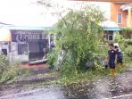 pohon-tumbang-timpa-mobil-nissan-di-plawa_20151218_185831.jpg