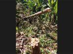 pohon-yang-ditebang-oleh-orang-tak-bertanggungjawab-di-hutan-manistutu-bebrapa-waktu-lalu.jpg