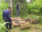 polisi-menemukan-sisa-kayu-sonokeling-yang-ditebang-oleh-pelaku-kadek-suwita.jpg