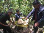 polisi-menunjukkan-barang-butki-berupa-pohon-yang-telah-ditebang-di-wilayah-hutan-munduk.jpg
