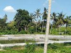 proyek-pembangunan-bbi-baha-yang-kini-belum-rampung-dan-ditumbuhi-rumput.jpg