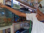 roni-menunjukkan-ikan-guppy-di-tempat-penjualan-ikan-hias-di-pasar-satria-denpasar.jpg