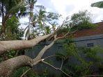 rumah-warga-di-desa-pesinggahan-klungkung-bali-tertimpa-pohon-tumbang-minggu-512020.jpg