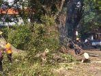 salah-satu-kegiatan-penganan-pohon-tumbang-yang-melibatkan-sejumlah-instansi.jpg