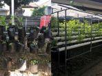 sejumlah-tanaman-sayuran-yang-sudah-tumbuh.jpg