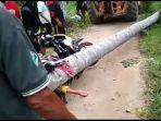 seorang-wanita-pengendara-motor-tewas-tertimpa-pohon-kelapa.jpg