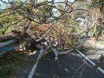 tabrak-pohon-tumbang.jpg