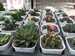 tanaman-kaktus-dipamerkan-dalam-bursa-tanaman-hias-di-denpasar-belum-lama-ini.jpg