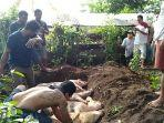 warga-di-desa-tumbu-kecamatan-karangasem-bali-mengubur-bangkai-babi-yang-mati.jpg