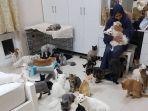 warga-oman-maryam-al-balushi-tinggal-bersama-480-kucing-dan-12-anjing-di-rumahnya.jpg