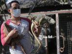 wayan-budi-artana-menunjukkan-iguana-hasil-budidaya.jpg
