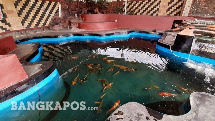 Yang Ingin Membuat Kolam Ikan Wajib Tahu Tips Agar Kolam Ikan Tidak Bocor Halaman All Bangka Pos