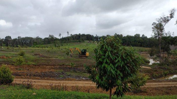 Alumni Polman Babel Rintis Kebun Buah-buahan Unggul di Belinyu, Total Ada Ribuan Batang Pohon Buah