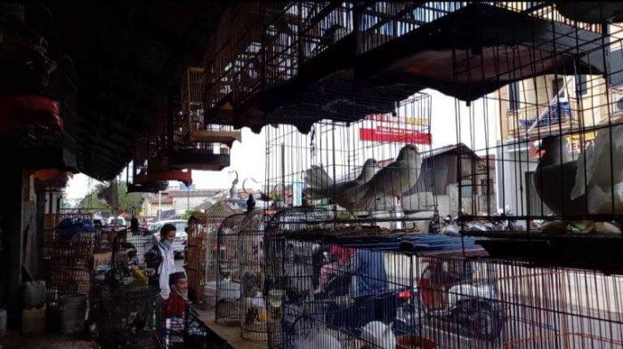 Pemkot Pangkalpinang Akan Pindahkan Pasar Burung di Jalan Trem, Faktor Ini Jadi Alasan