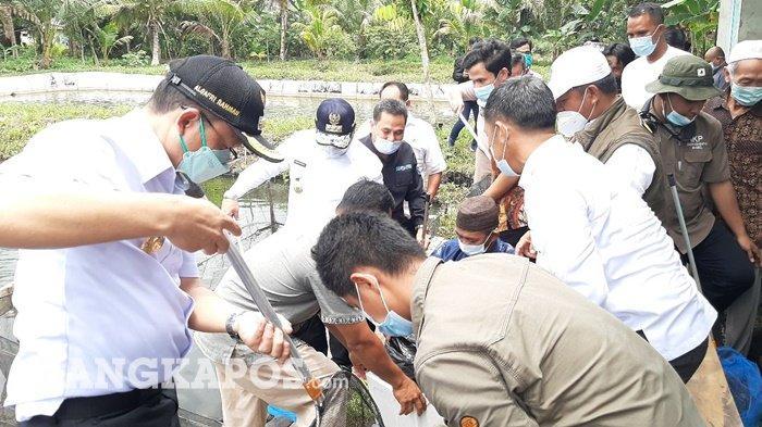 Bupati dan Wakil Bupati beserta Gubernur Bangka Belitung saat melakukan panen ikan air tawar di Desa Pinang Sebatang, Rabu (10/3/2021).