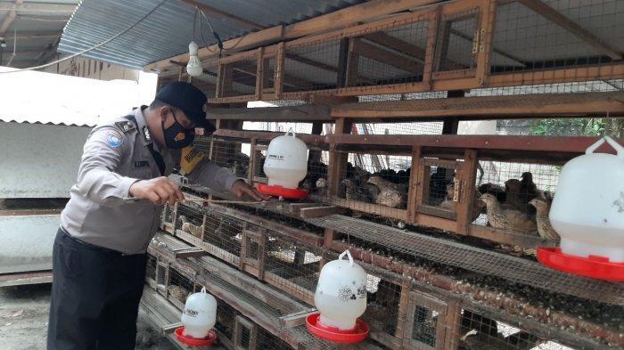 Berawal dari Hobi Brigadir Antonius Tekuni Bisnis Ternak Burung Puyuh, Raup Omzet Rp 5 Juta Perbulan