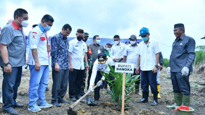 Pemkab Bangka Usulkan Kembali 243,3 Hektare Program Peremajaan Sawit Rakyat