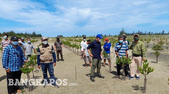 Bangka Belitung Masuk Sembilan Wilayah Rehabilitasi Mangrove, Begini Targetnya
