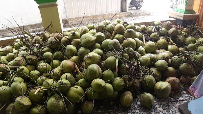 Ribuan kelapa di samping rumah Jupe