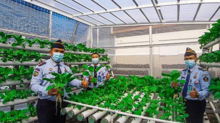 Ramadhan Produktif, LPKA Pangkalpinang Panen Sayur Pakcoy Hasil Karya Pembinaan Andikpas
