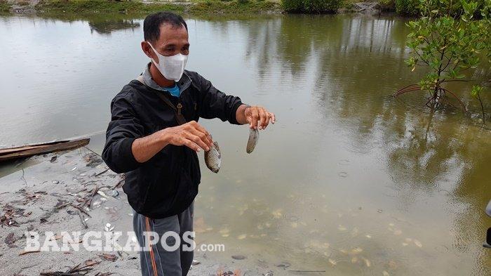 Ratusan Ikan Mati Mendadak di Kolam Wisata Pantai Cemara, Pengelola: Ikannya Mabuk, Berputar-putar