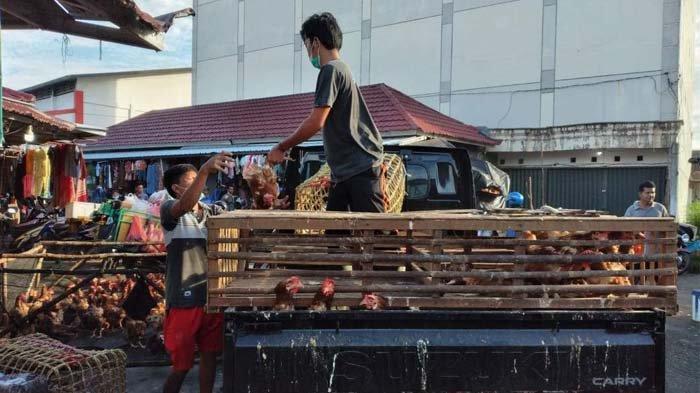 Pedagang ayam merah petelur sedang menurunkan ayam dagangannya dari.mobil di Pasar Kite Sungailiat, Sabtu (8/5/2021).