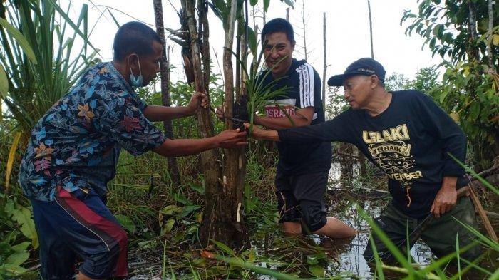 Peringati Hari Lingkungan Hidup, Sahabat Alam Tanam Anggrek di Kawasan Sungai Upang