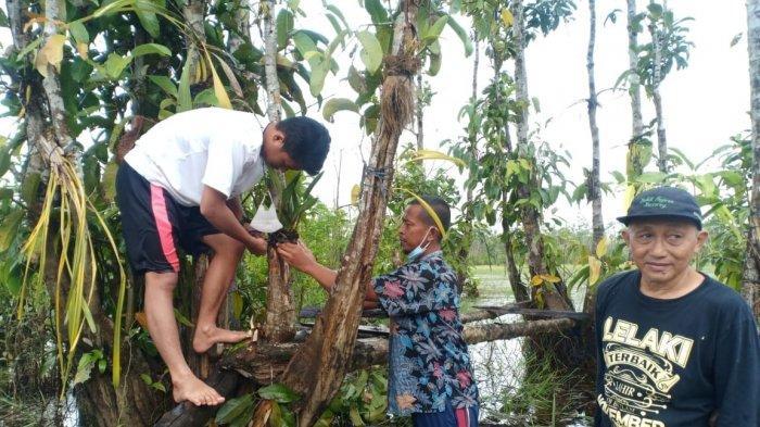 Beberapa orang sahabat alam ditemani sejumlah pengunjung rela berbasah-basahan menanam berbagai jenis anggrek di Pulau Anggrek Elsye Lestari, Kawasan Biodiversity Sungai Upang Desa Tanah Bawah Kabupaten Bangka Provinsi Bangka Belitung, Minggu (06/06/2021).