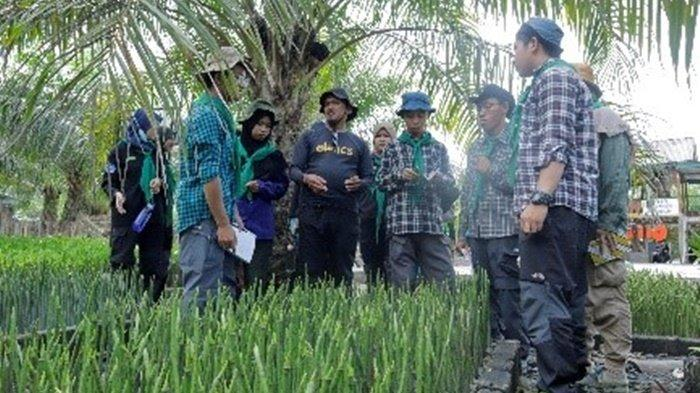 Lakukan Implementasi Lapangan di Munjang Mangrove, KOMPAS UBB Semai 6000 Bibit Bakau