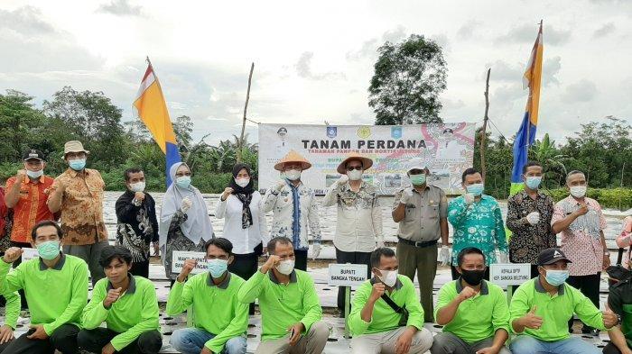Tanam Perdana Komoditi Hortikultura di Desa Pasir Garam,Pemkab Bangka Tengah Dukung Sektor Pertanian
