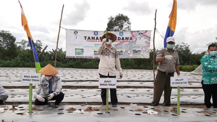 Bupati Bangka Tengah bersama Wakil Bupati dan jajaran lainnya saat melakukan penanaman perdana kegiatan Pertanian Keluarga (PK) tahun 2021, di Desa Pasir Garam, Kamis (17/6/2021)