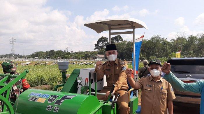 Wakil Bupati Kabupaten Bangka Tengah Herry Erfian saat panen padi di Kelompok Tani Pacir Jaya 2 Desa Namang, Selasa (6/7/2021)