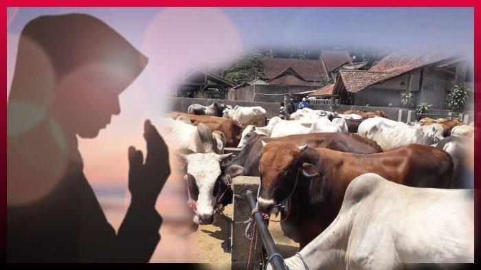 Doa Berkurban Lengkap Panduan Menyembelih Hewan Kurban dan Tips Memilih Sapi atau Kambing