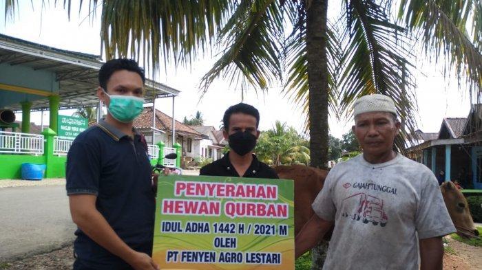 Penyerahan Bantuan CSR Hewan Kurban dari PT Fenyen Agro Lestari di Desa Mendo,Kecamatan Mendo Barat Kabupaten Bangka, Sabtu (17/07/2021).