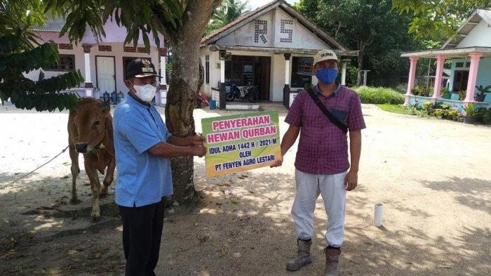 Penyerahan Bantuan CSR Hewan Kurban dari PT Fenyen Agro Lestari di Desa Cit,Kecamatan Riau Silip Kabupaten Bangka, Sabtu (17/07/2021).