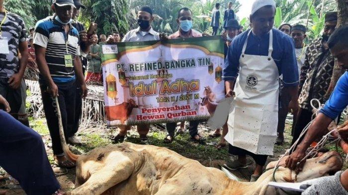 PT RBT Group Salurkan 56 Sapi dan 13 Kambing Kurban di Bangka Belitung