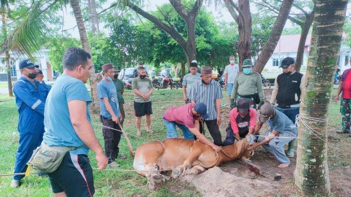 TNI AL Distribusikan Daging Kurban Kepada Masyarakat Sekitar Mako Lanal Bangka Belitung