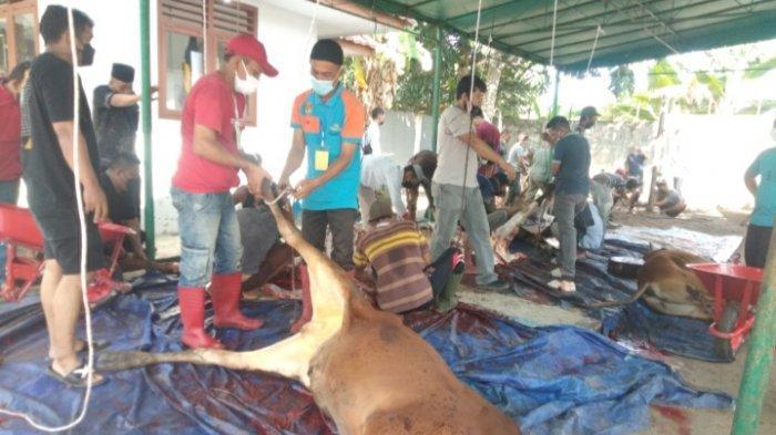 Pemkab Bangka Sembelih 30 Sapi Kurban, Wakil Bupati Bangka Hingga Ketua DPRD Bangka Turun Tangan