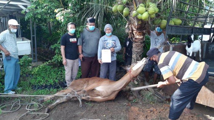 PWI Bangka Belitung Berkurban Tiga Sapi dan Delapan Kambing