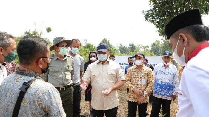 Gubernur Tanam Perdana Kopi, Kapulaga, dan Cabe Jamu, Wujudkan Program Klaster Kopi Babel