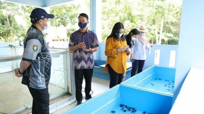 Gubernur Kunjungi Penangkaran Penyu Guntung Bersama Keluarga