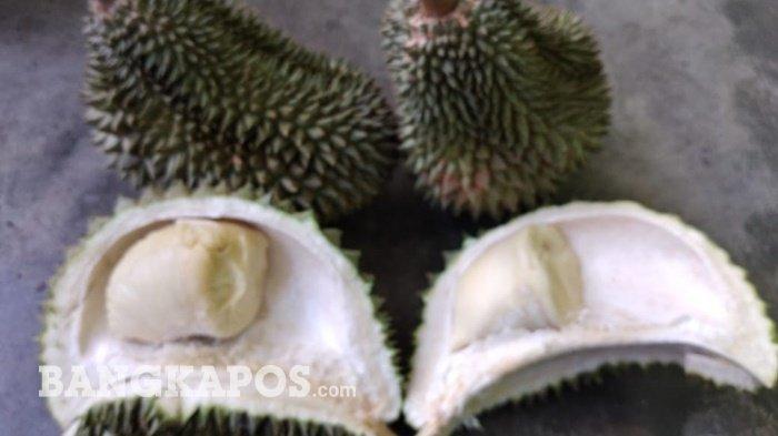 Buah Durian Cumasi dari kebun Athung