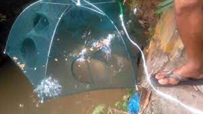 Viral Video Tiktok Bocah Menangkap Ikan Menggunakan Payung, Netizen Sampai Tercengang