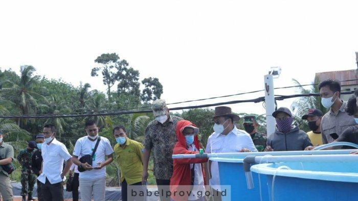 Gubernur Tebar Perdana Benur Udang Vaname produksi UPT Balai Pemuliaan Ikan Babel