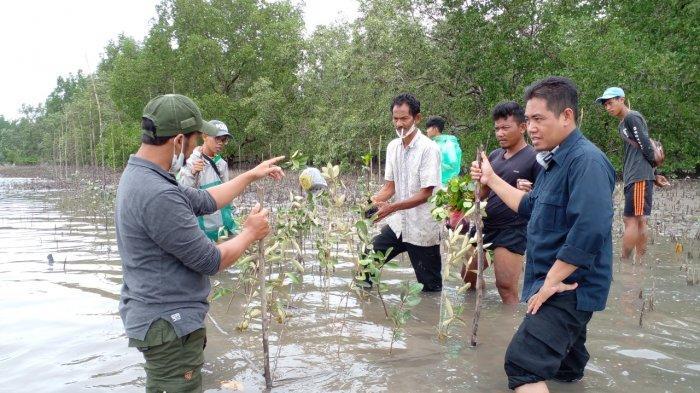 Luas 17 Ha Lahan Desa Tuik Sudah Ditanami Mangrove